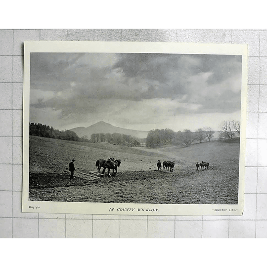 1905 Horse Teams In The Field In County Wicklow