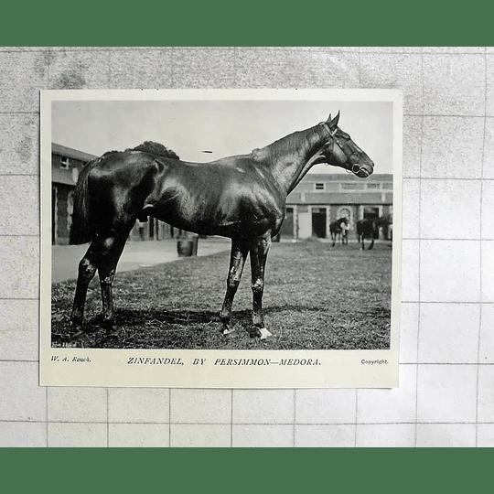 1905 Lovely Racehorses Zinfandel By Persimmon- Medora