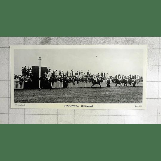 1905 Horse Racing, Zinfandel Winning