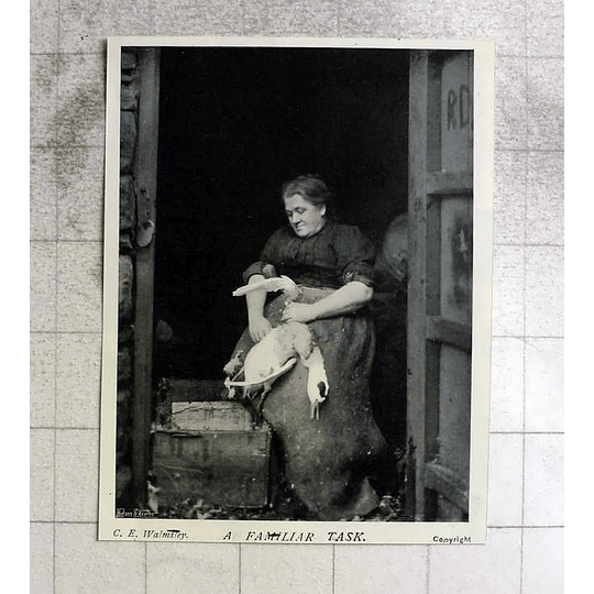 1905 Housewife Plucking Poultry, Ce Walmsley
