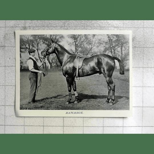 1905 Lovely Racehorse, Matchbox