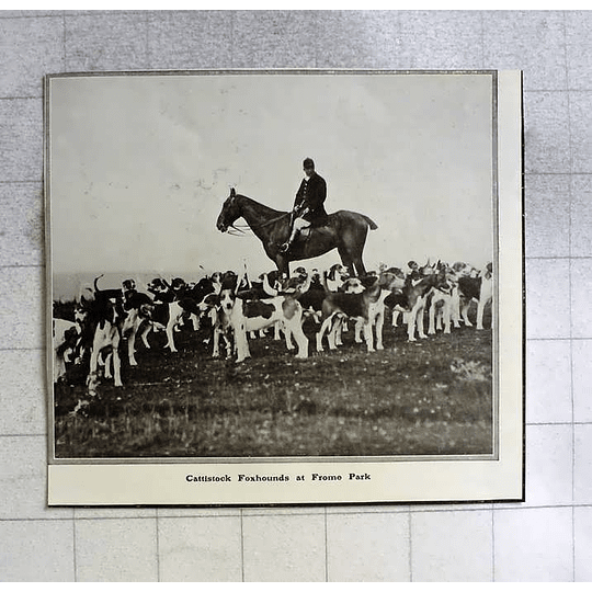 1910 Cattistock Foxhounds At Frome Park