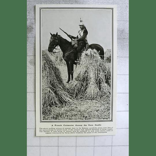 1914 Harvest Being Gathered In Despite Flying Shells, Belgium