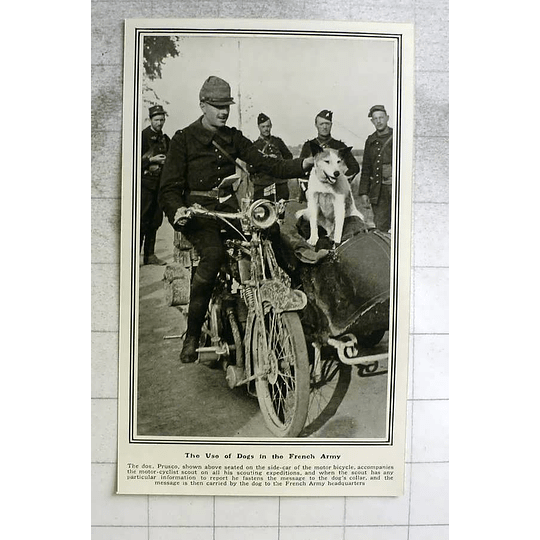 1914 Messenger Dog Used By French Army Motorbike Sidecar
