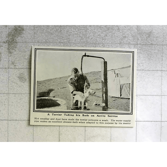 1919 Terrier Taking His Bath On Active Service