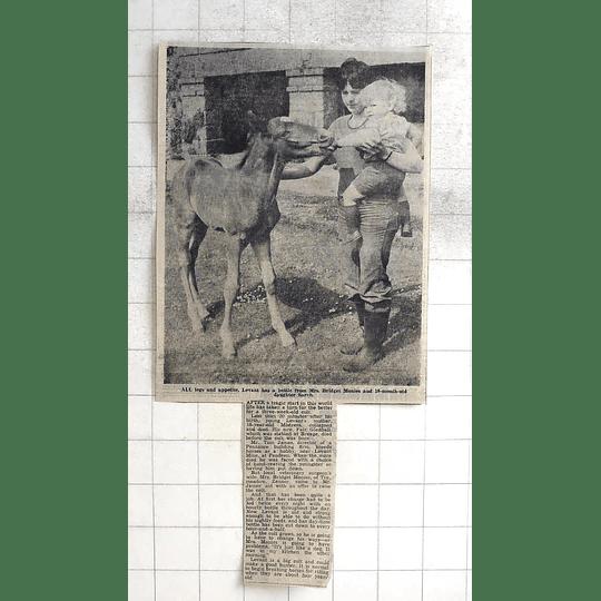 1975 3 Yr Old Colt Levant Taking Bottlebridget Monies Daughter Sarah Zennor