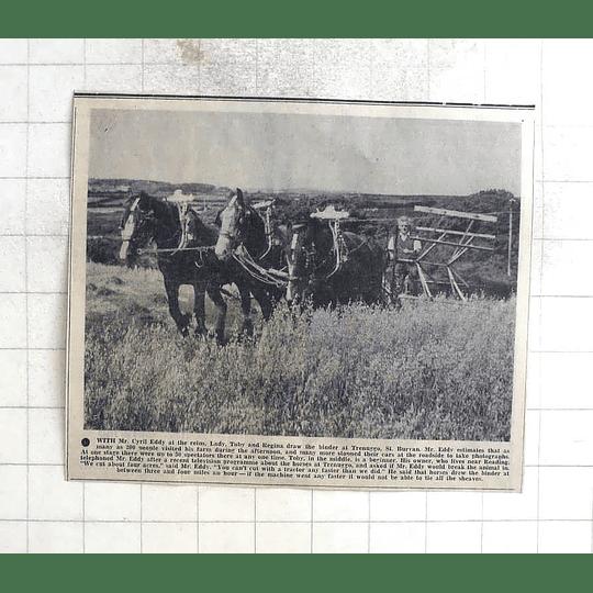 1975 Horses, Lady, Toby, Regina, Draw Binder Cyril Eddy, Trenuggo St Buryan