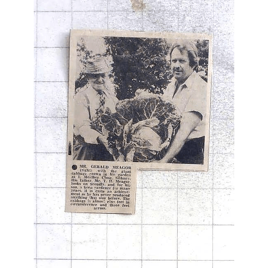 1975 Giant Cabbage Grown By Mr Gerald Meagor, Sithney, Helped By Dad