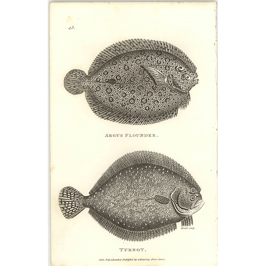 1803 Argus Flounder And Turbot Shaw Engraving