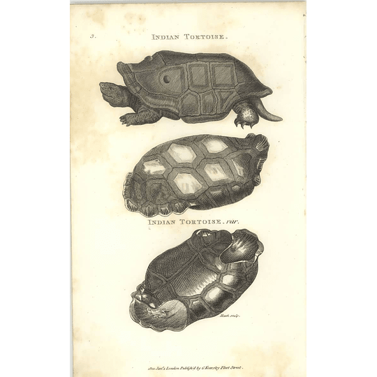 1802 Indian Tortoise Varieties Shaw Amphibia Print