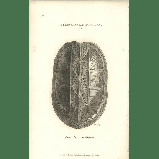 1802 Pennsylvanian Tortoise Variety From Liverian Museum Shaw Amphibia Print