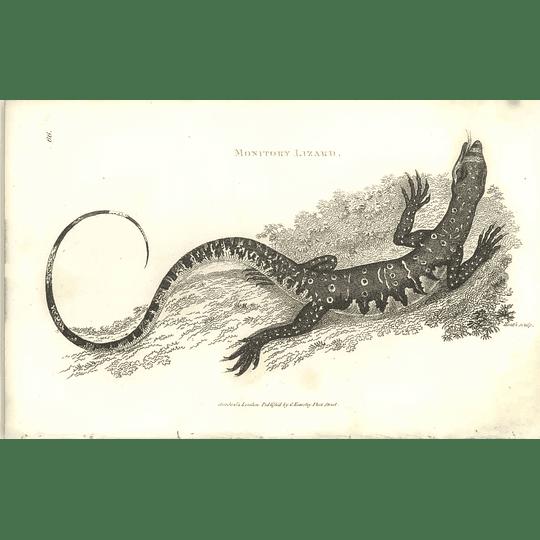 1802 Monitor Lizard Shaw Amphibia Print