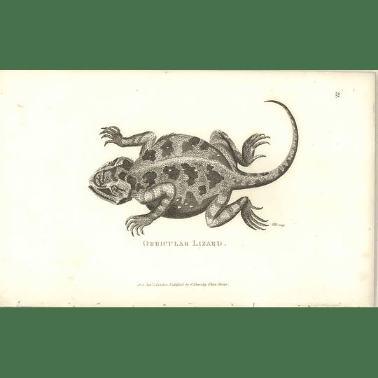 1802 Orbicular Lizard Shaw Amphibia Print