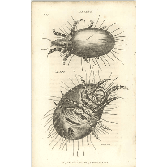1803 Acarus Siro, Top, Bottom Shaw, Griffiths Engraving