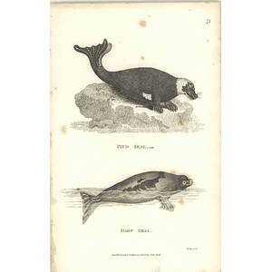 1800 Common Seal And Pied Seal Shaw Engraved Mammal Print