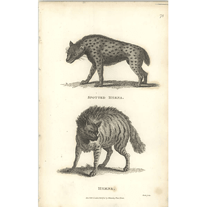 1800 Spotted Hyena And Common Hyena Shaw Engraved Mammal Print