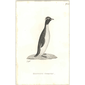 1825  Hopping Gorfou Shaw, Griffiths Engraving