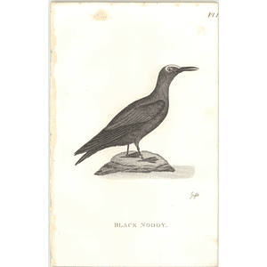 1825  Black Noddy Shaw, Griffiths Engraving