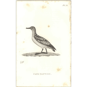 1825  Cape Daption Shaw, Griffiths Engraving