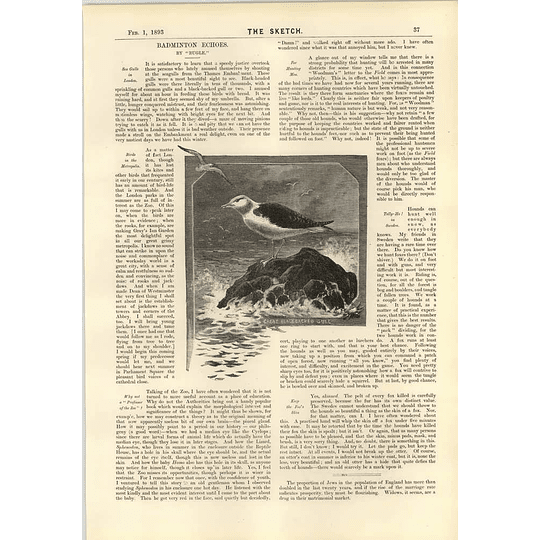1893 Foxhunting In Sweden Keep The Skin Birds In London