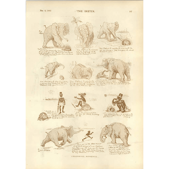 1893 Louis Wain Elephant Hedgehog Negro Fat Lady Spider Woman Leonard Raven-hill