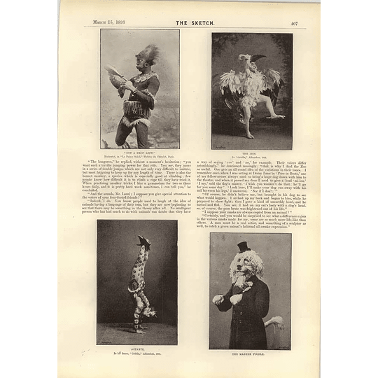 1893 Mr Charles Lauri The Master Poodle Ibis Man Monkey Puss In Boots