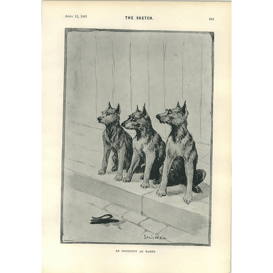 1893 Reminiscence Act Of Union Louis Wain Dogs Innocent As Babes Cartoon
