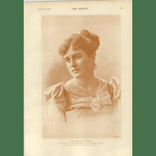 1893 Phil May Cartoon Ulster Munster Miss Evelyn Millard Black Domino