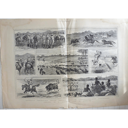 1885 Sketches Of A Stockman's Life In Australia