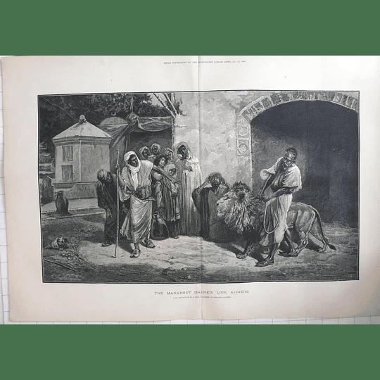 1883 The Marabout Sacred Lion, Algiers, Artwork E Pavy