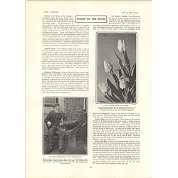 1902 Thomas Coffin Birkenhead Survivor International Badminton Crystal Palace