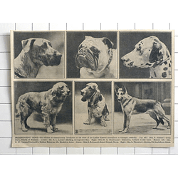 1936 Prize-winning Dogs At Olympia Mrs Hudson, Miss Monkhouse