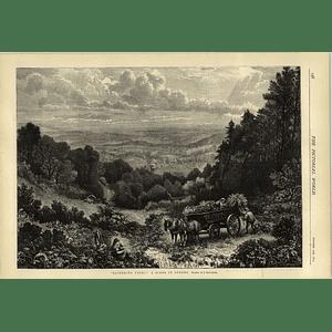 1874 Gathering Ferns Scene In Surrey Drawn By J Matthews