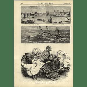 1874 Poultry Show Harrison Wear Nottingham Floods La Plata Sinking Biscay