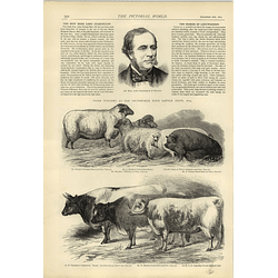 1874 Dr Ball Irish Lord Chancellor Prize Pigs Sheep Cows