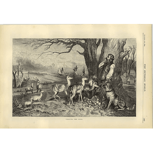 1874 Estate Manager Feeding The Deer