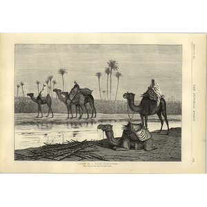1874 Camels At A Sugar Plantation Artwork Walter Severn