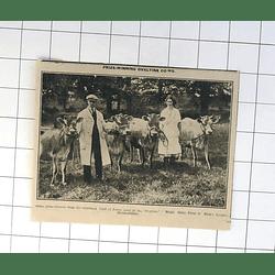 1932 Prize-winning Ovaltine Cows Kings Langley Model Dairy Farm