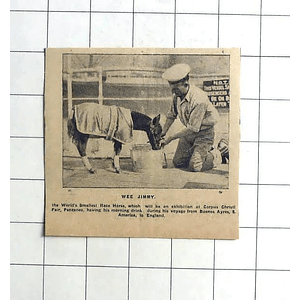 1938 The World's Smallest Racehorse,wee Jimmy Having His Morning Drink