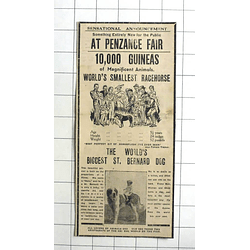 1938 Worlds Smallest Racehorse 24 Inches High, Nero St Bernard, Penzance Fair