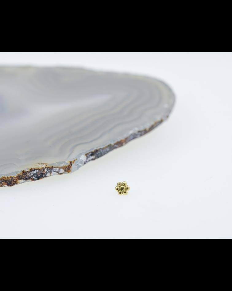Margarita - Flor de oro amarillo - 14g
