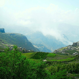 Coffee from the Cloud (Yemen)