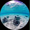 KIT OJO DE PEZ PARA OLYMPUS TG6 / FCON-T026. COD#64362
