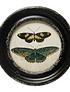 Cuadros mariposas polillas