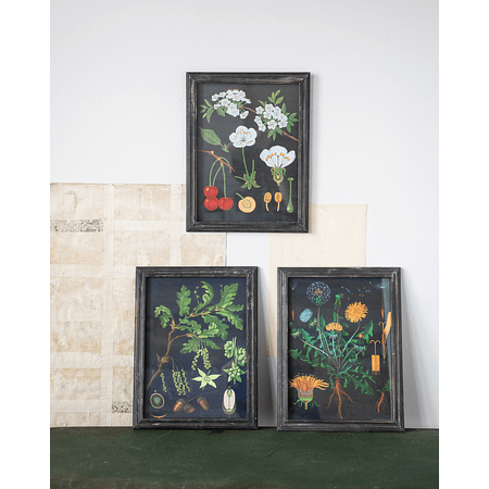 Set cuadros botánicos