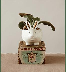 Joyero conejo