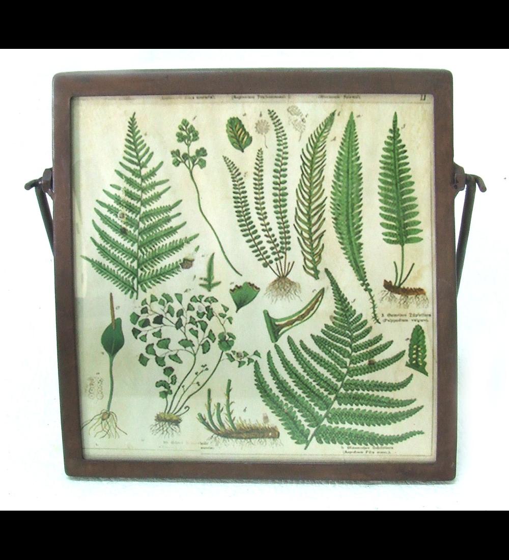 Marco foto botánico