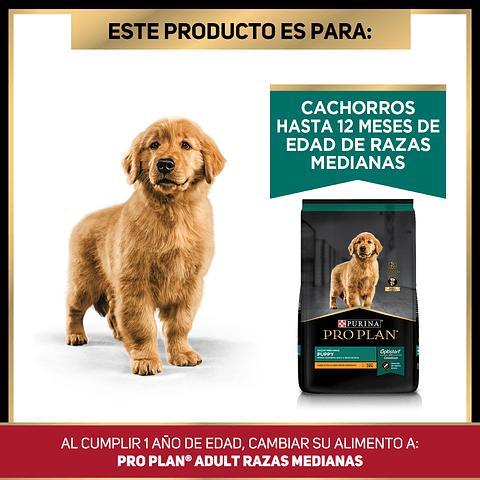 Cachorro Raza Mediana