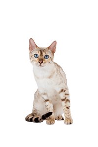 Royal Canin Ageing +12 - 12x85 Grs