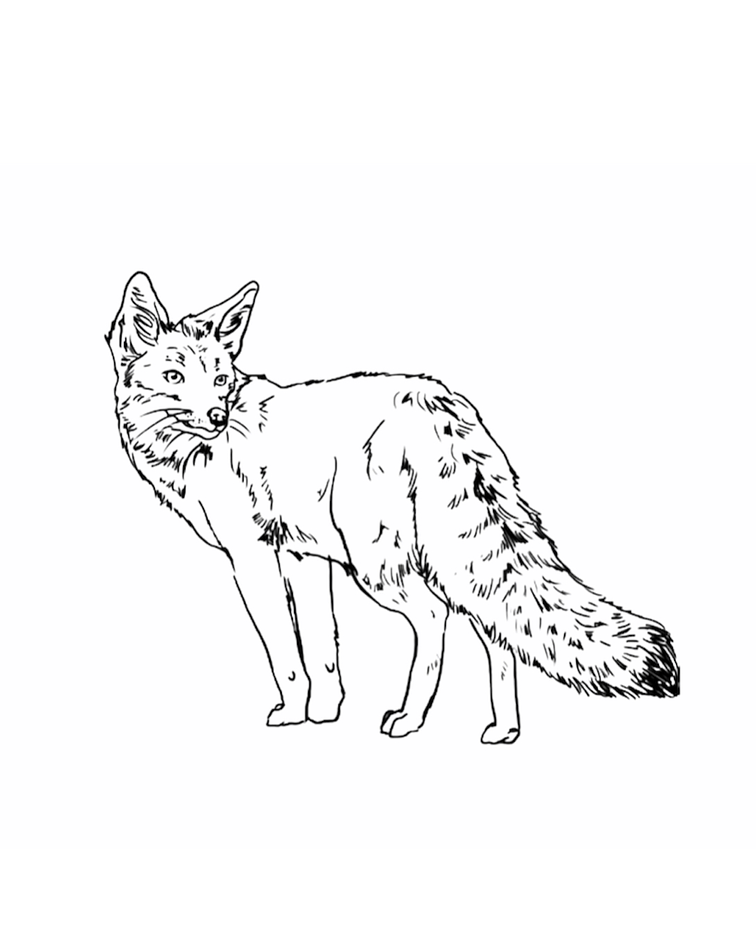 Diseños de Animales chilenos / REFORESTEMOS CHILE :)